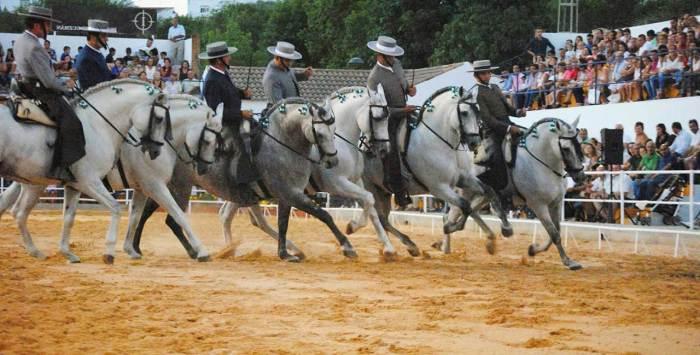 exhibición de caballo andaluz