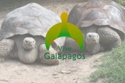 galapagos-tortoise-3 copia