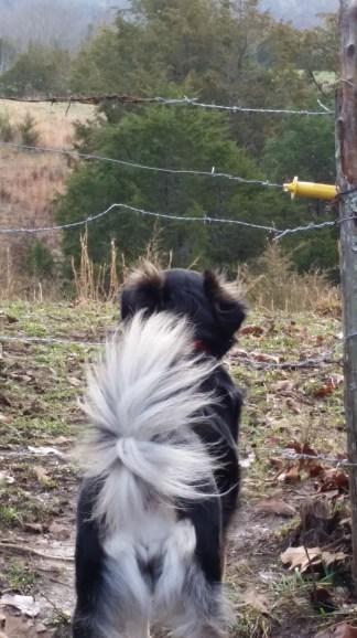 Wind blown look.