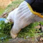 庭の草むしりを簡単にしたい!草むしりのコツややり方を解説