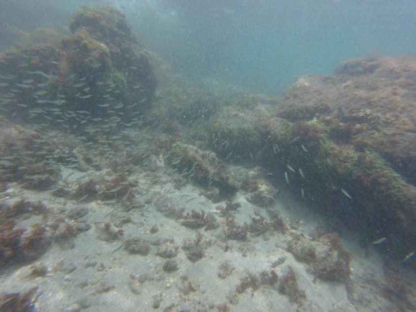 Snorkeling nella Laguna Azzurra di Ilha Grande