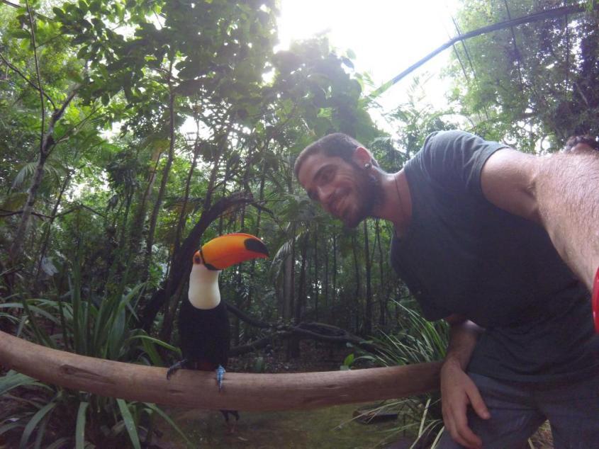 Il Tucano al Parco degli Uccelli Brasile