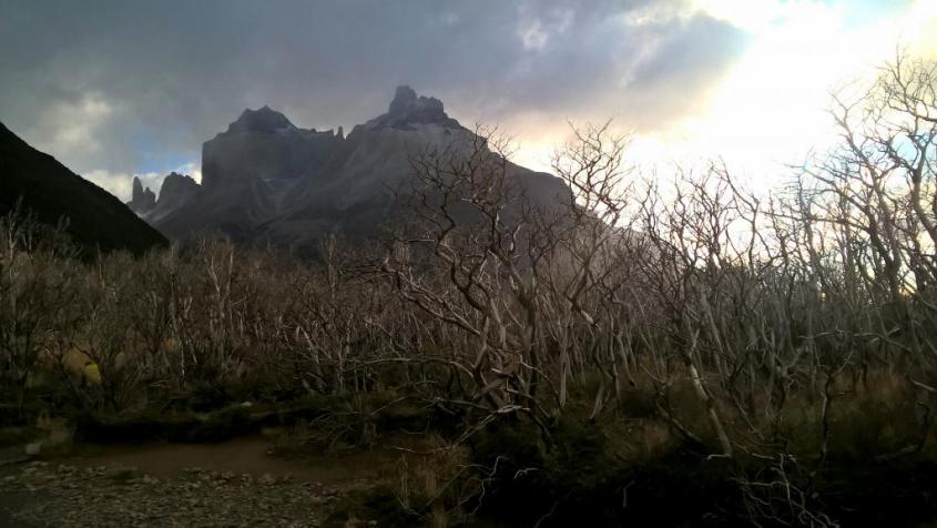 """Bosco di alberi bruciati al trekking """"W"""" nel Parco Nazionale Torres del Paine in Cile"""