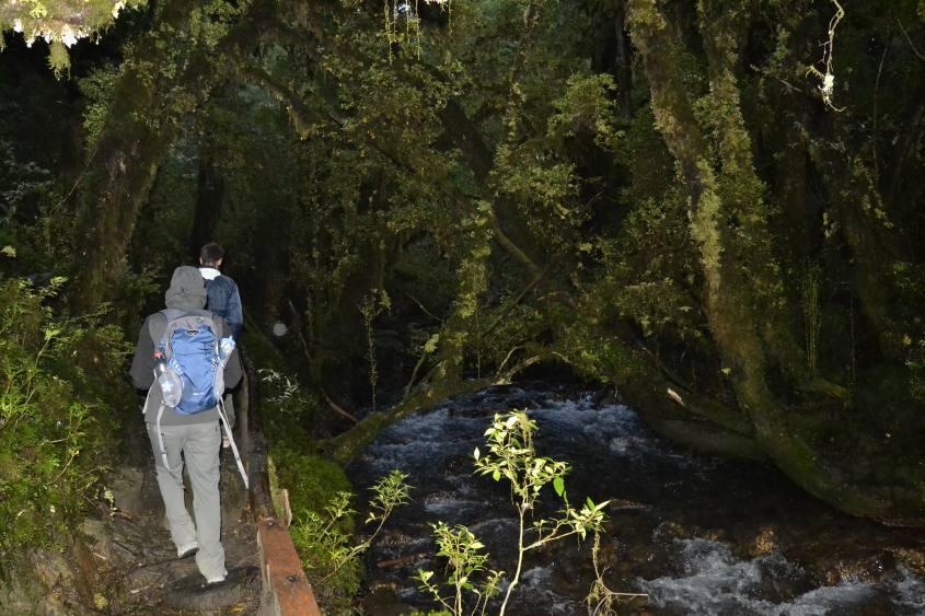 Bosco Incantato nel Parco Queulat in Cile