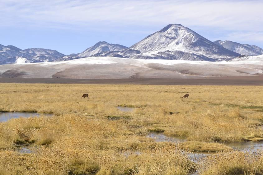 Paesaggi rigogliosi e vinicunca nel deserto di Atacama in Cile