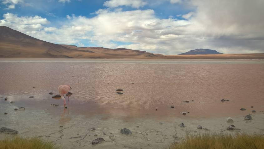 Laguna Colorada e fenicottero durante il tour al Salar di Uyuni