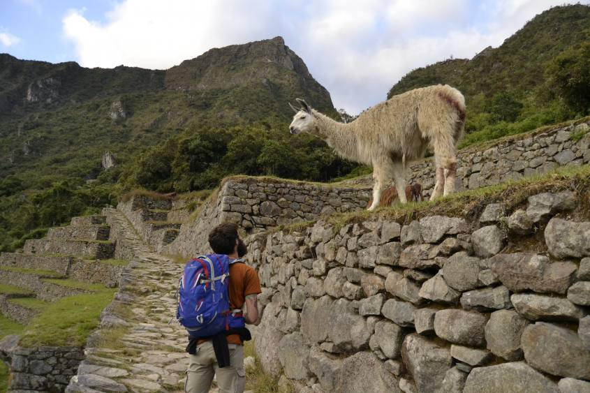 Leonardo insieme ad un lama alle rovine di Machu Picchu