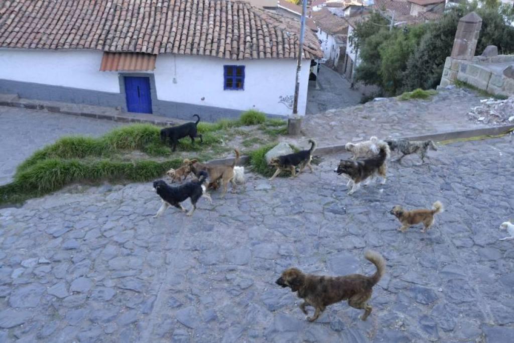 Cani Cusco