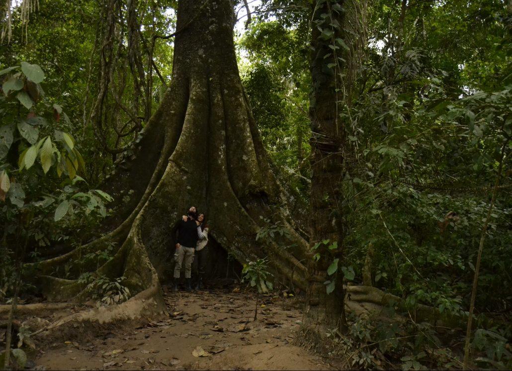 Alberi secolari Riserva Tambopata