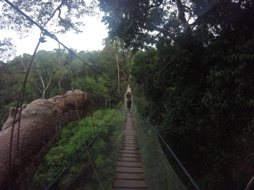 Panoramica del Ponte Sospeso all'interno della Foresta Amazzonica in Perù