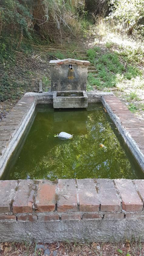 Fontana del Sambuco Via Francigena Bolsena - Montefiascone