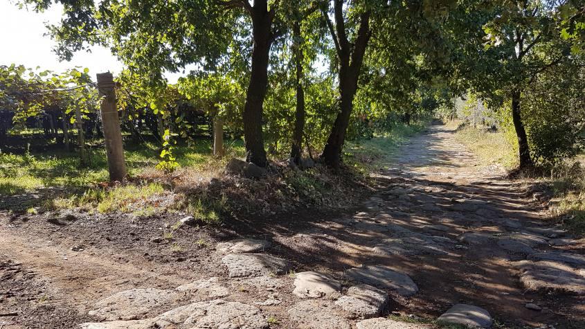 Antica Cassia e Kiwi Montefiascone - Viterbo Via Francigena