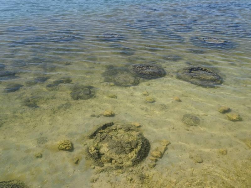 Gli stromatoliti del Lago Thetis