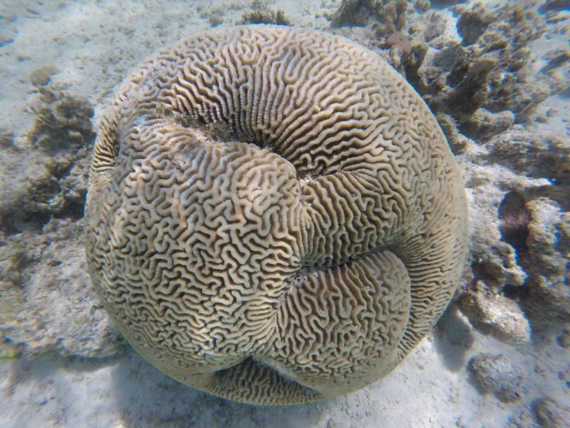 Spugna sul fondale della barriera corallina di Coral Bay in Western Australia