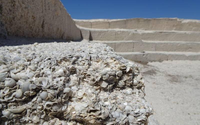Costruzioni interamente fatte di conchiglie a Hamelin Pool di Shark Bay