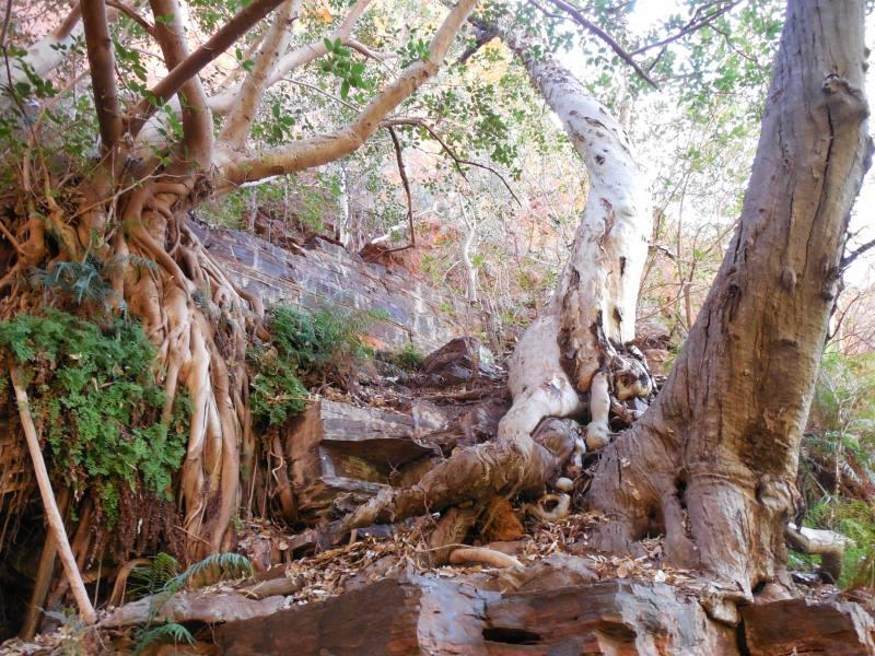 Percorso di trekking all'interno del Weano Gorge nel Parco di Karijini