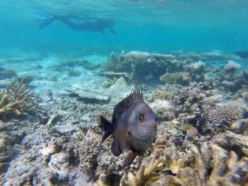 Fondale barriera corallina dalla spiaggia Oyster Stacks all'interno del Parco Nazionale Cape Range in Western Australia