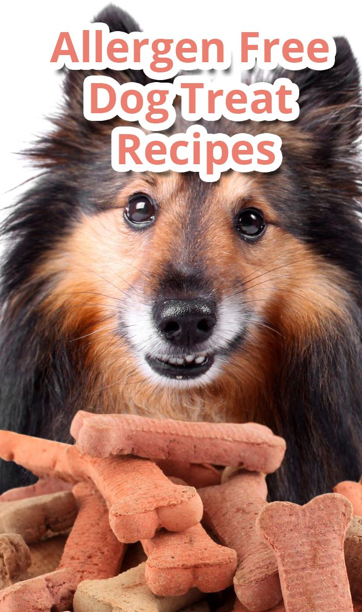 Allergen Free Dog Treat Recipes