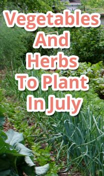 Vegetables And Herbs To Plant In July
