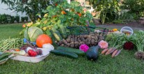 Plant In Your Kitchen Garden: 111 Herbs, Vegetables, Edible Flowers And Fruit