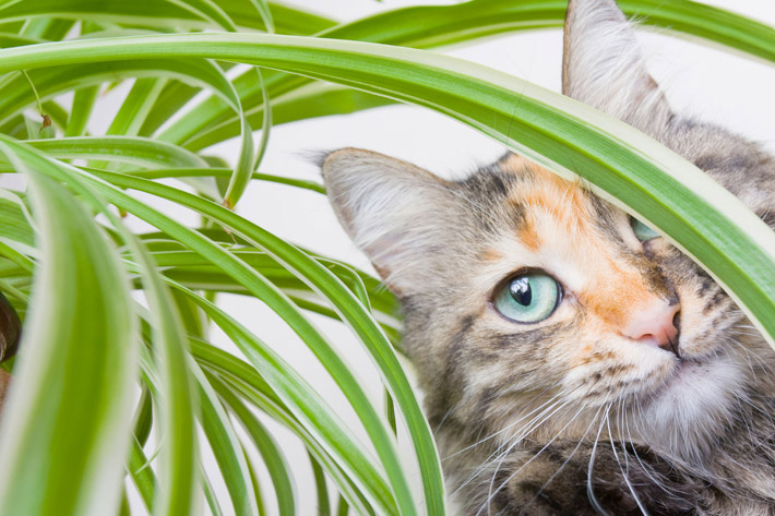 Pet Friendly House Plants