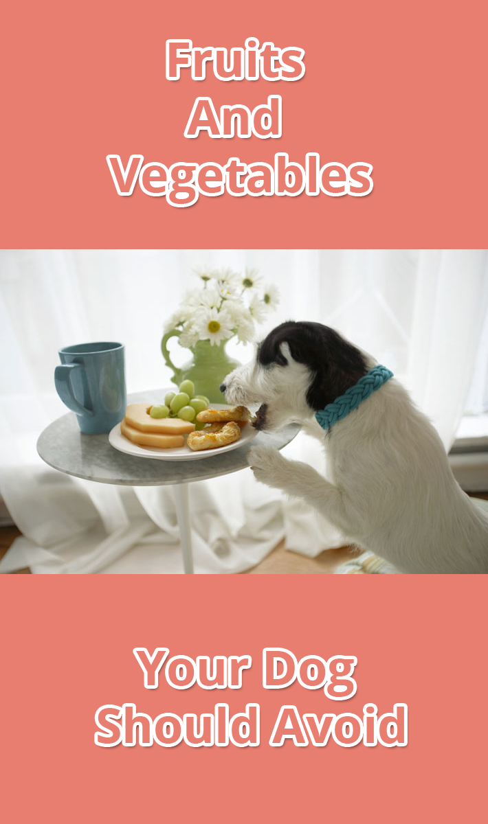 Fruits And Vegetables Your Dog Should Avoid