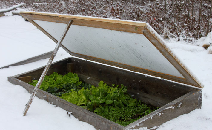 How To Grow Vegetables All Winter Long