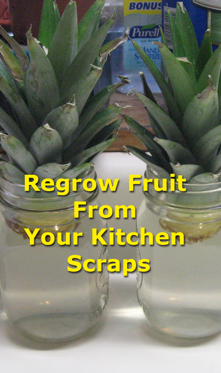 Regrow Fruit From Your Kitchen Scraps