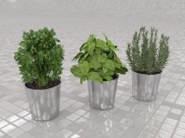 Growing Culinary Herbs Indoors
