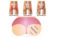 The Exercises, Stretches & Injuries To Avoid For Your Glutes - Gluteus Maximus
