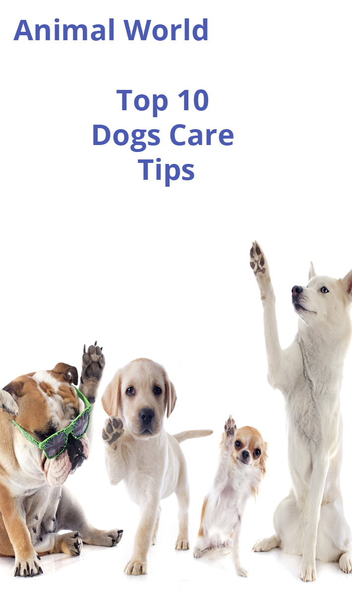 Top 10 Dogs Care - Tips