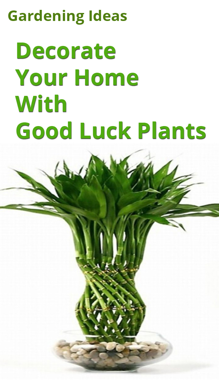 Decorate Your Home With Good Luck Plants