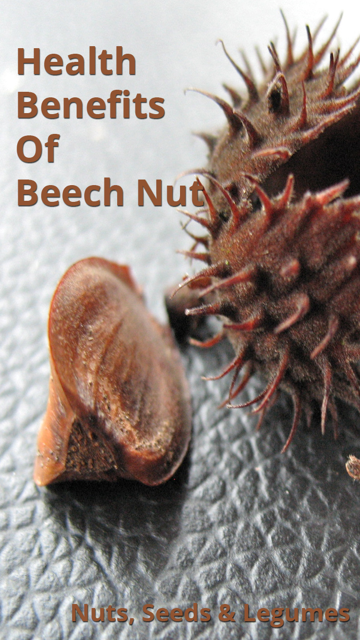 Health Benefits Of Beech Nut