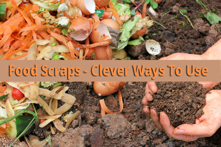 Food Scraps – Clever Ways To Use