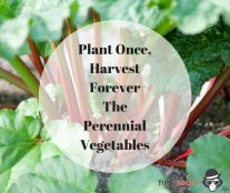 Plant Once, Harvest Forever - The Perennial Vegetables