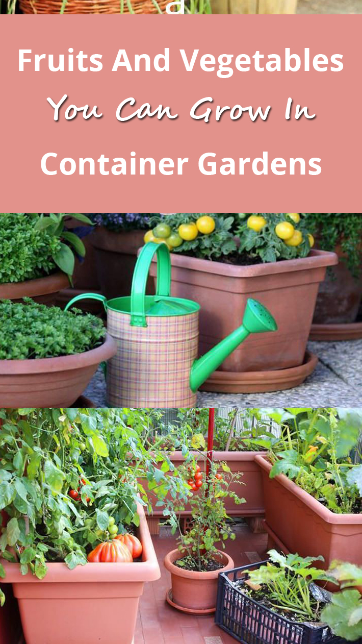 Fruits And Vegetables You Can Grow In Container Gardens