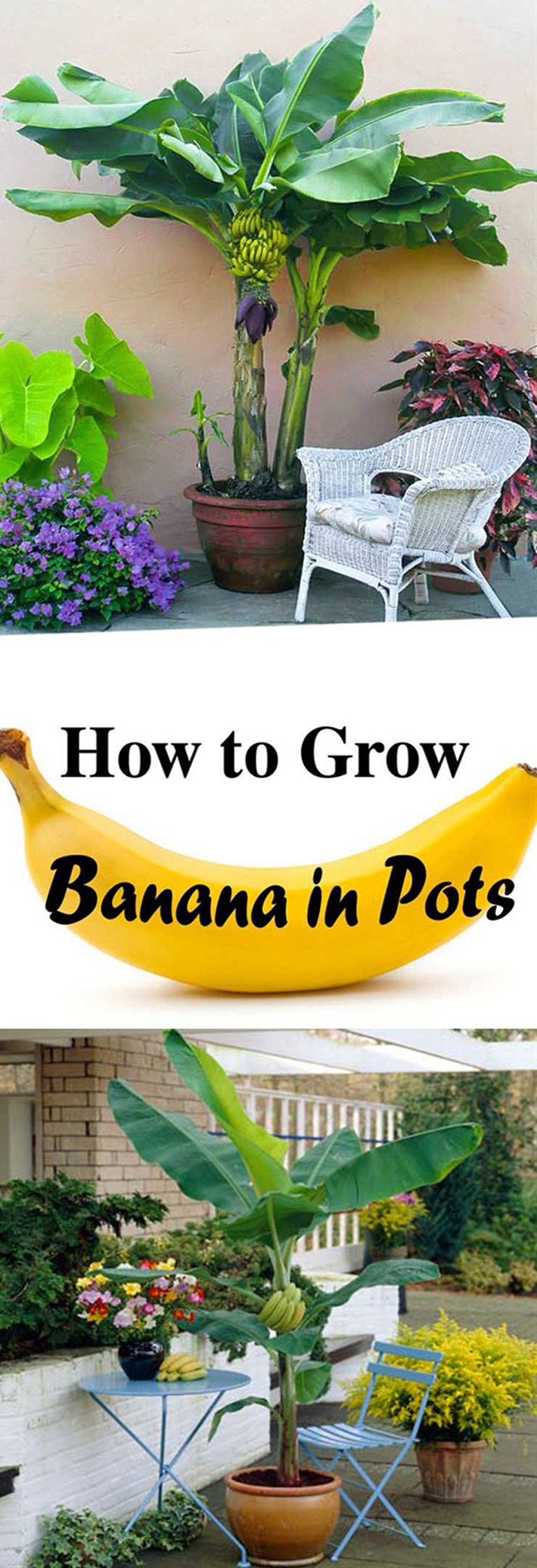 Your Guide To Grow Vegetables And Fruits In Containers