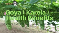 Goya ( Karela ) – Health Benefits: The Plant That Kills Cancer Cells, Stop Diabetes And Blood Pressure!