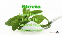 Stevia - Learn How To Grow This Natural Sugar Replacement