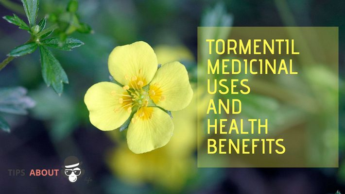 Medicinal Uses And Health Benefits – Tormentil