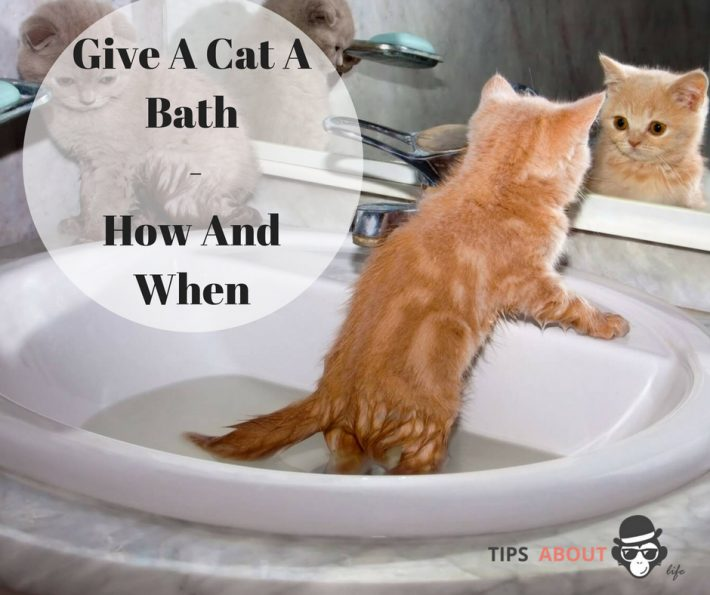 Give A Cat A Bath – How And When