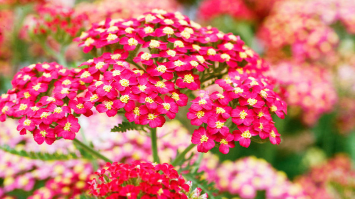 Top Plants For Your Fall Garden