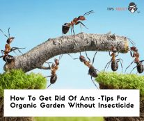 How To Get Rid Of Ants - Tips For Organic Garden Without Insecticide