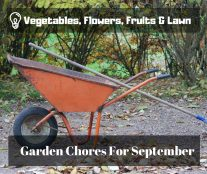 Vegetables, Flowers, Fruits & Lawn - Garden Chores For September