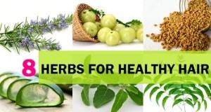 Top Herbs to keep the hair healthy