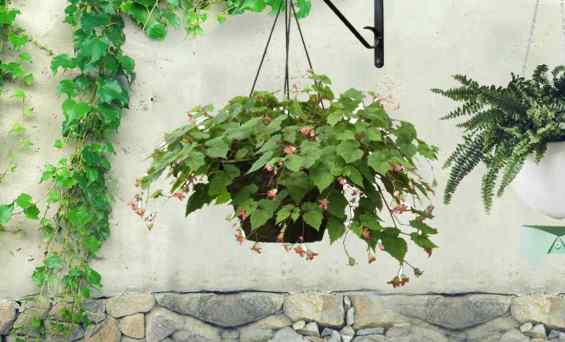 Top 3 Attractive Vertical Wall Planter for You