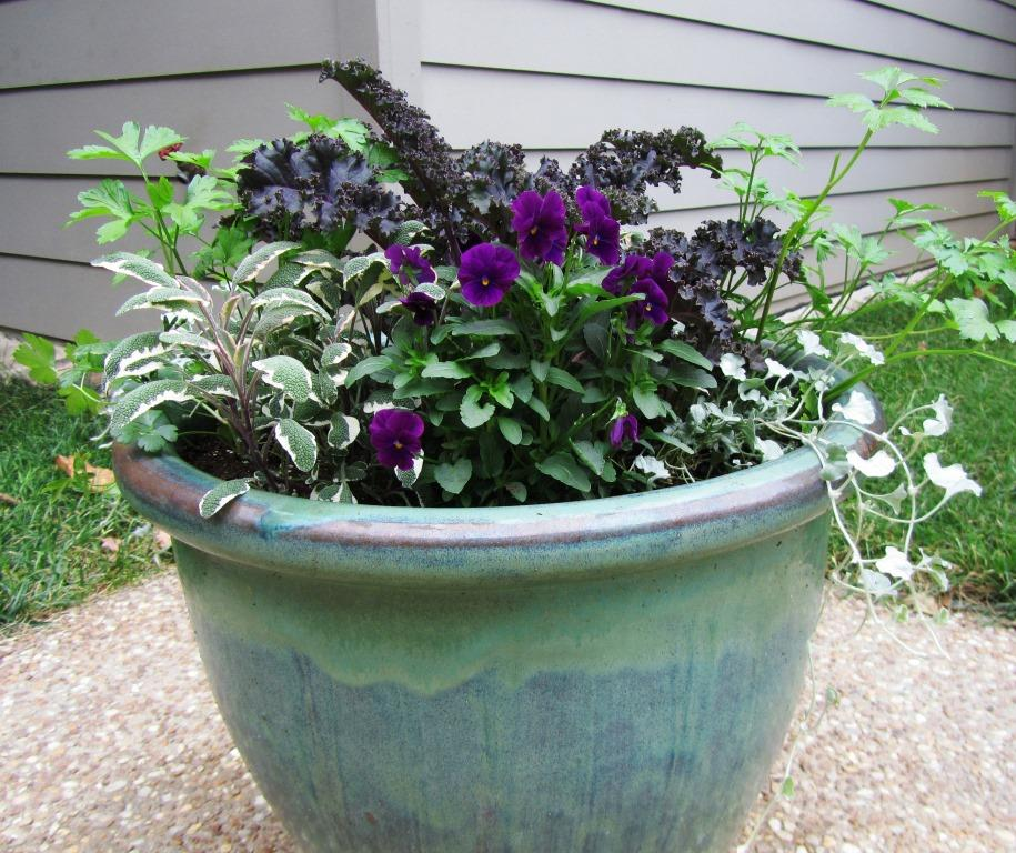 4 Ideas For Fall Winter Container Gardens