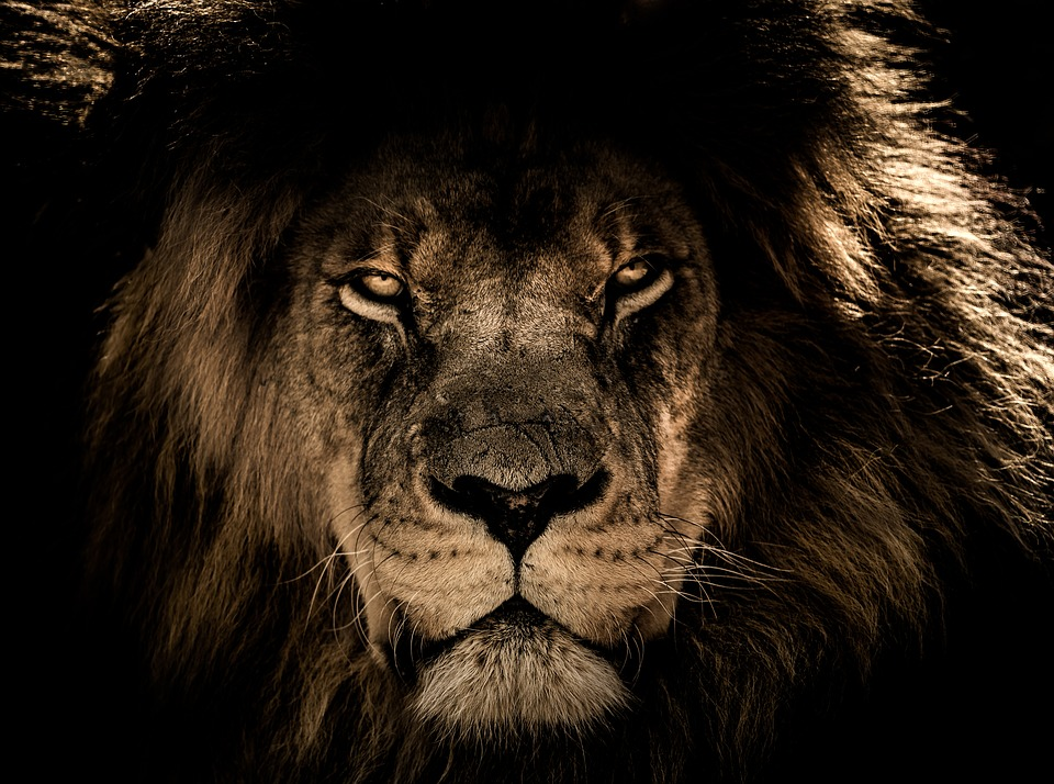 Top Full Hd Lion Wallpaper For Computers