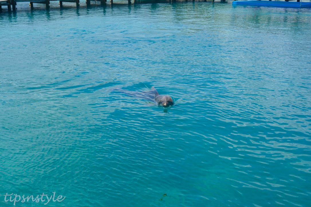 dolphins ocean world