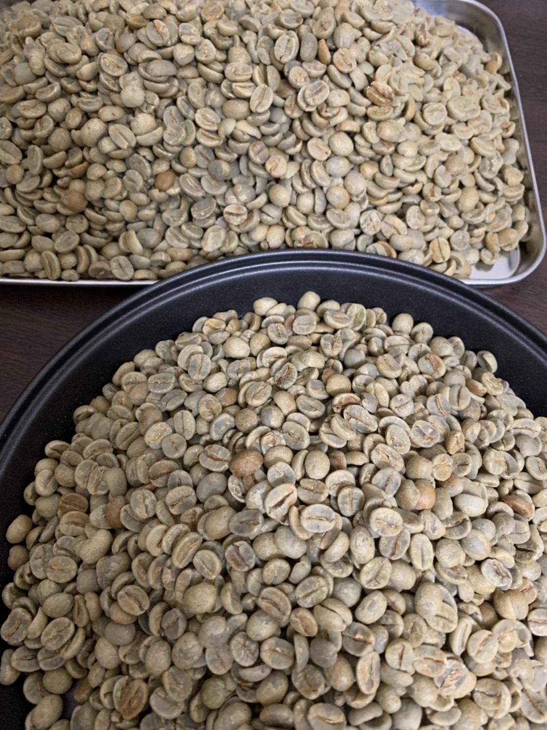 ブラジルサントスNo.2 生豆の写真